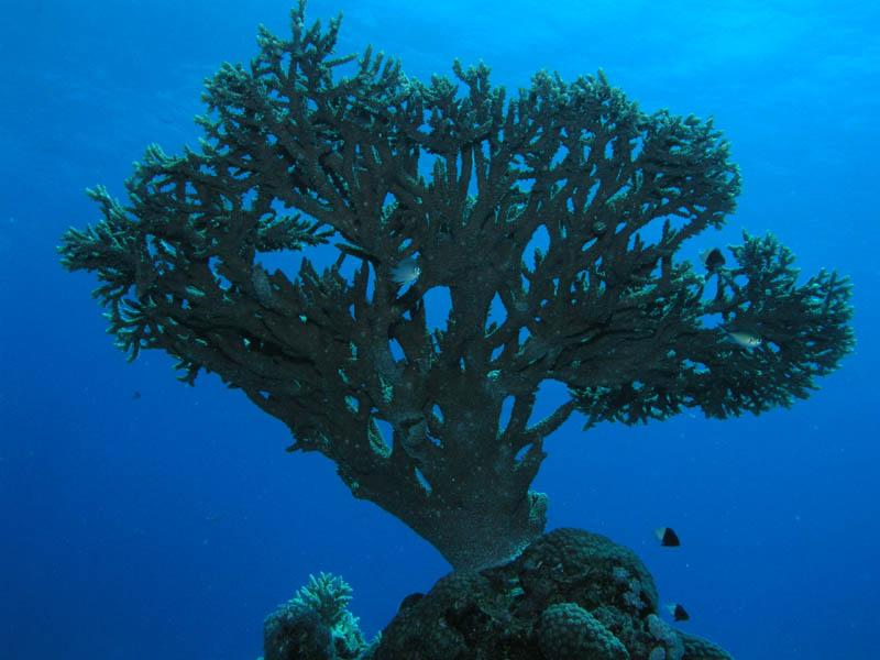 """фото """"И под водой растут деревья"""" метки: путешествия, подводные, Африка"""