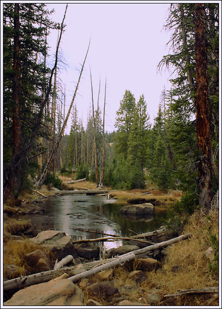 "фото ""Лесная."" метки: пейзаж, лес"