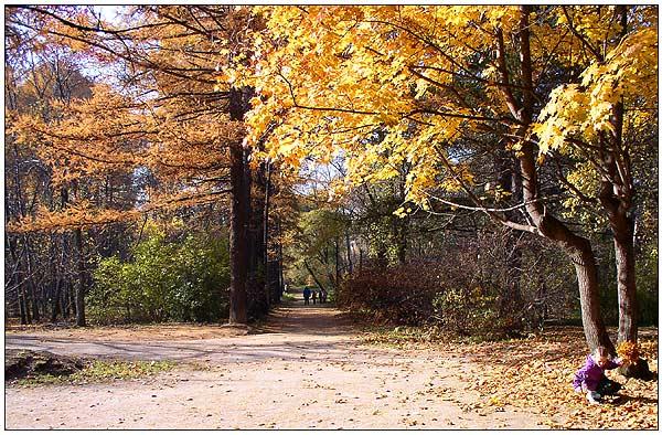 """фото """"Вот и осень пришла..."""" метки: пейзаж, осень"""