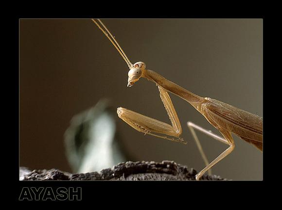 "фото ""Hunger Look !!!"" метки: природа, насекомое"