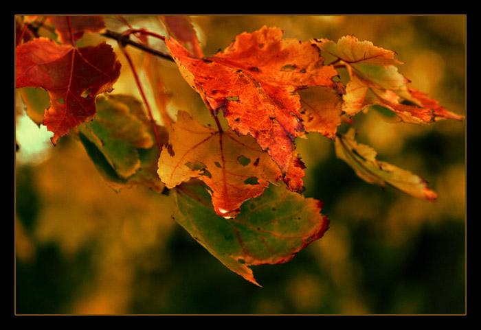 """фото """"""""Осенняя палитра"""""""" метки: макро и крупный план,"""