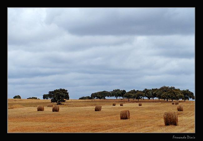 "фото ""The harvest"" метки: пейзаж, лето"