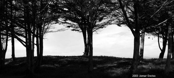 """фото """"A house for a tree"""" метки: природа, черно-белые,"""