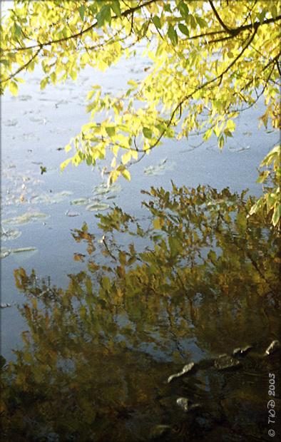 """фото """"Осенние рефлексии"""" метки: пейзаж, осень"""