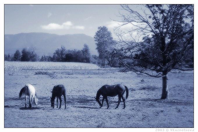 """фото """"-*-*-"""" метки: природа, пейзаж, домашние животные, осень"""