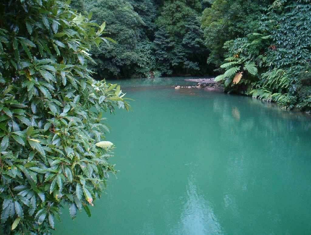 """фото """"Green"""" метки: пейзаж, вода, лес"""