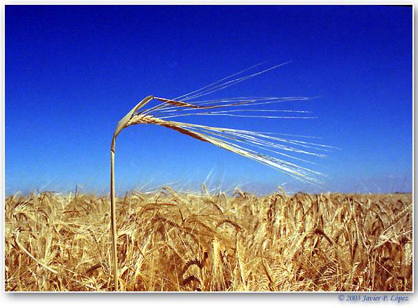 "фото ""Castilla_01"" метки: пейзаж, лето"
