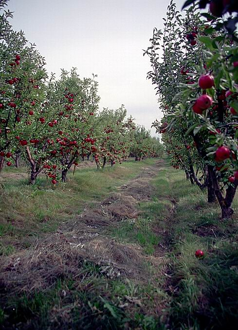"""фото """"Райские сады (1)"""" метки: природа, цветы"""