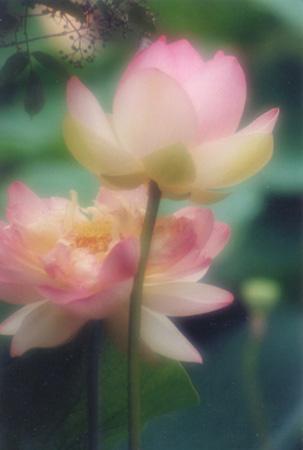 """фото """"Side by Side"""" метки: природа, макро и крупный план, цветы"""