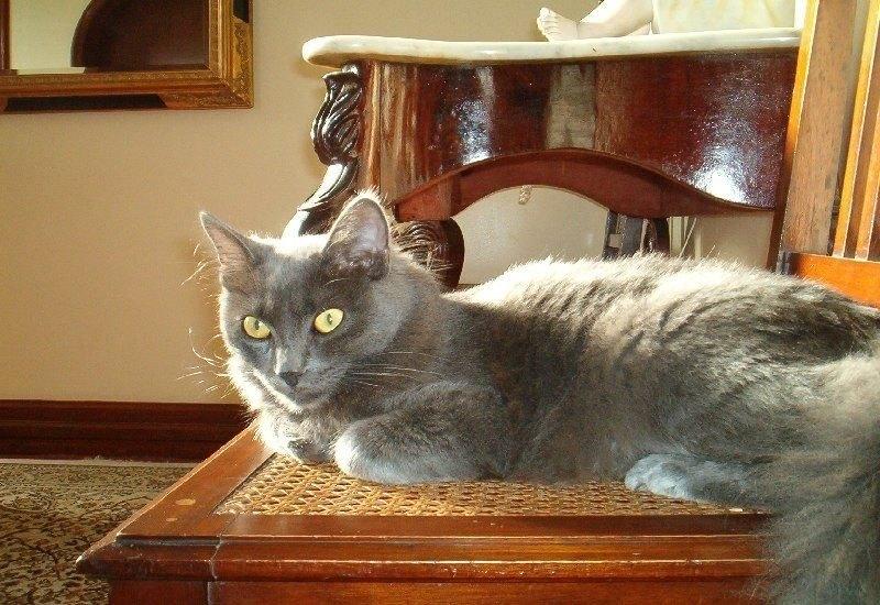 """фото """"Cat - Oscar"""" метки: природа, домашние животные"""
