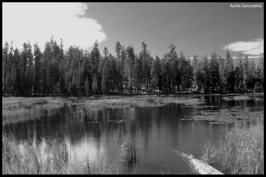 """фото """"BW siesta"""" метки: природа,"""