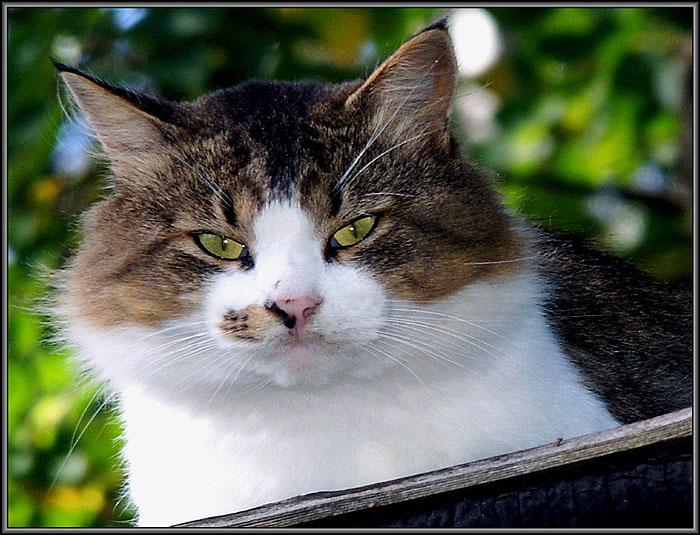 """фото """"Морпехи  называют его """"Батя"""""""" метки: природа, домашние животные"""