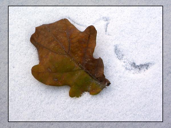 """фото """"Зима наступила"""" метки: пейзаж, макро и крупный план, зима"""