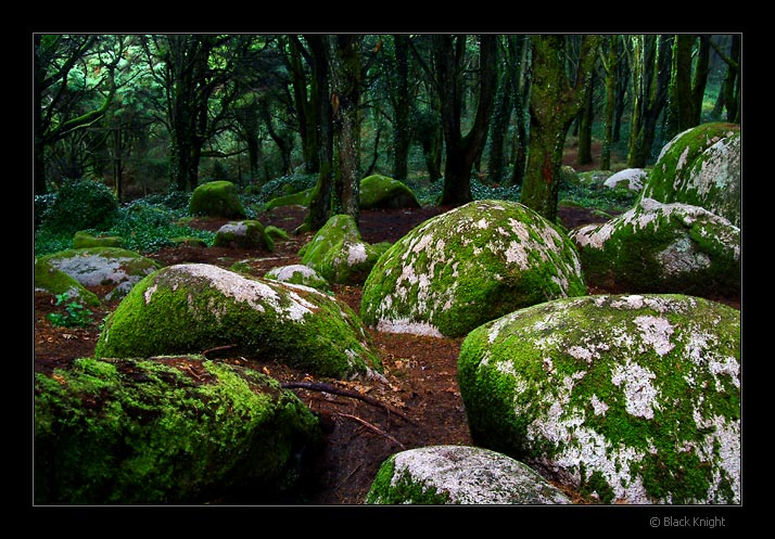 "фото ""Hard Rock Forest"" метки: пейзаж, горы, лес"