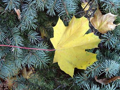 """фото """"Ура,  к  нам  тоже  пришла  осень!"""" метки: природа, пейзаж, осень"""