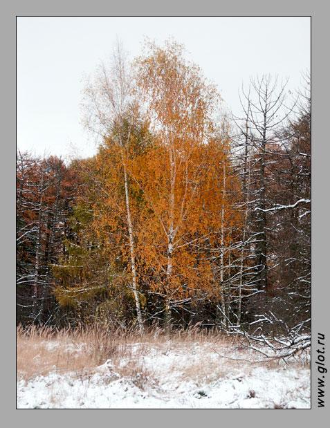 "фото ""Первый снег"" метки: пейзаж, зима, осень"