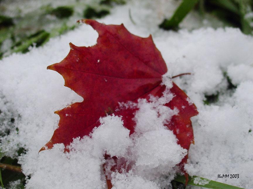 """фото """"First Snow"""" метки: макро и крупный план,"""