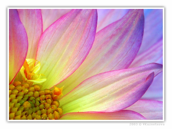 """фото """"**---**"""" метки: макро и крупный план, природа, цветы"""