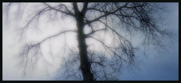 "фото ""waiting for snow"" метки: разное,"