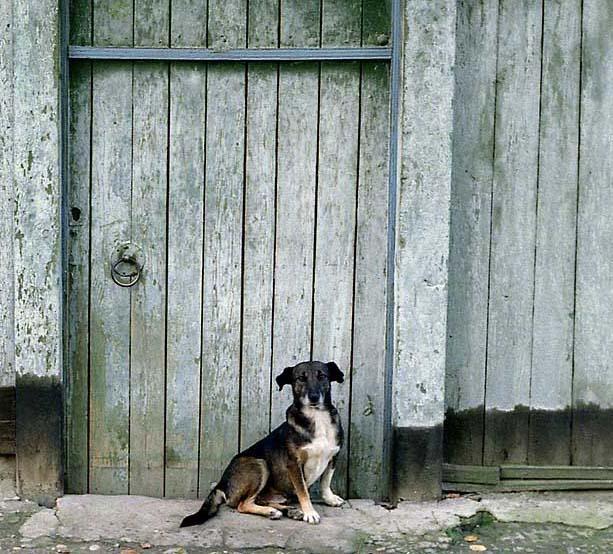 """фото """"Охрана."""" метки: жанр, природа, домашние животные"""