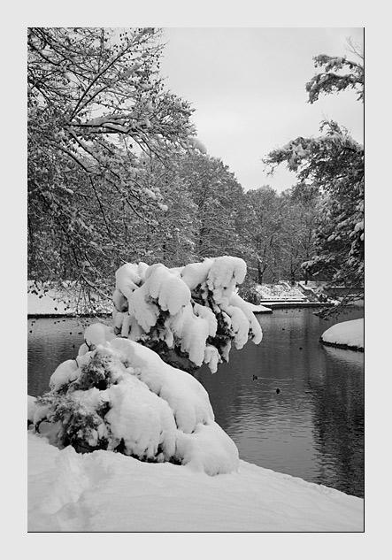 """фото """"Первый снег"""" метки: пейзаж, природа, зима"""