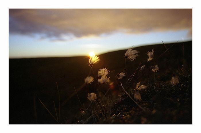 """фото """"***"""" метки: природа, пейзаж, закат"""