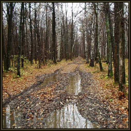 """фото """"Дождливый день в лесу."""" метки: пейзаж, лес, осень"""