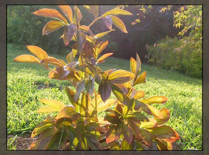 """фото """"Осеннее настроение"""" метки: природа, пейзаж, осень, цветы"""