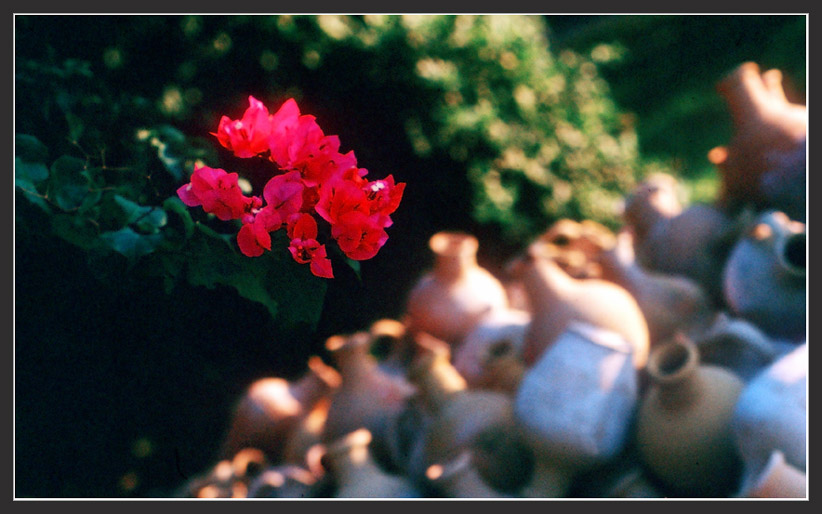 """фото """"Красный"""" метки: природа, пейзаж, цветы"""