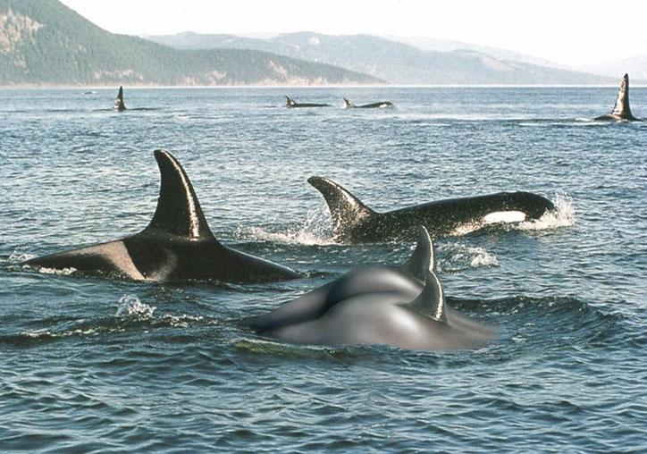 """фото """"Большая океанская русалка"""" метки: ню, юмор,"""