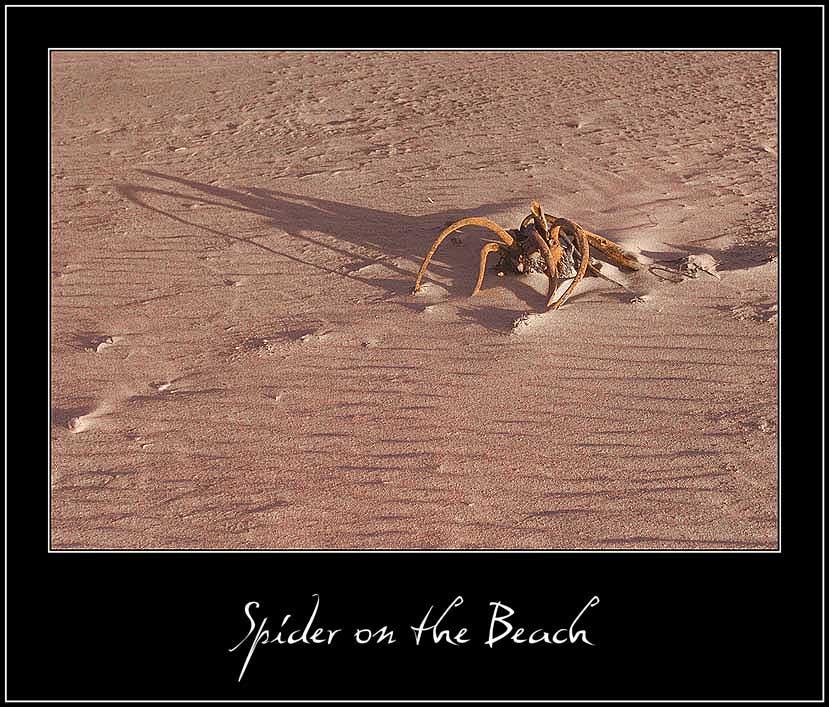 "фото ""Паук на пляже"" метки: абстракция, пейзаж, вода"