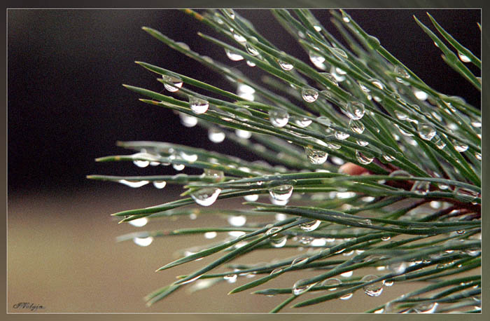 "фото ""Осень"" метки: природа,"