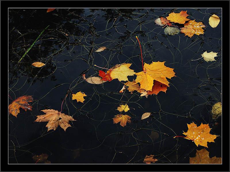 """фото """"Осенние кадры-12"""" метки: природа,"""