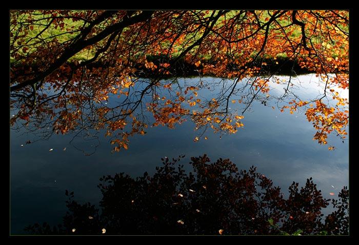 "фото """"Осень в небесах"""" метки: природа,"