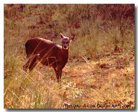 """фото """"Deer"""" метки: природа, дикие животные"""