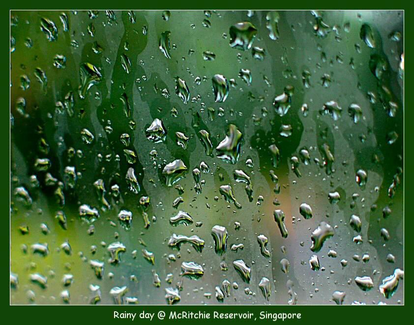 """фото """"Rainy day @ McRitchie Reservoir, Singapore"""" метки: природа,"""