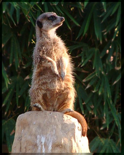 "photo ""SUPERVISOR"" tags: nature, genre, wild animals"