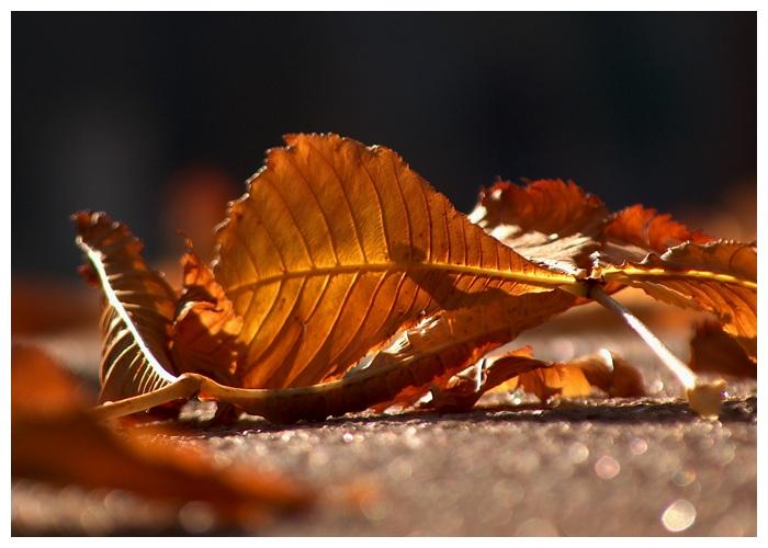 """фото """"Leaf"""" метки: макро и крупный план,"""