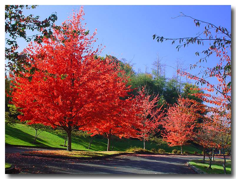 """photo """"To the lovers of the fall colors"""" tags: landscape, nature, autumn"""