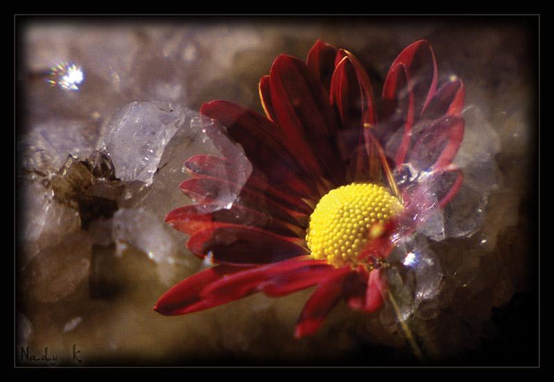 """фото """"Такой не броско-не пламенный,Мой цветочек каменный"""" метки: макро и крупный план, природа, цветы"""