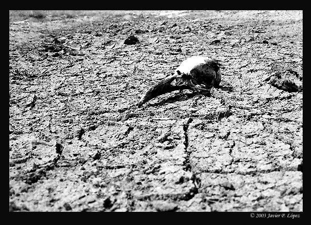 "фото ""Zero-life"" метки: черно-белые,"