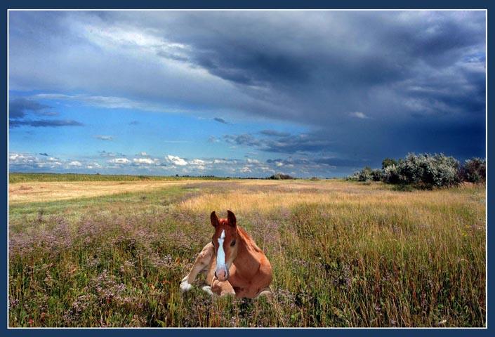 """фото """"Первогодок"""" метки: природа, домашние животные"""