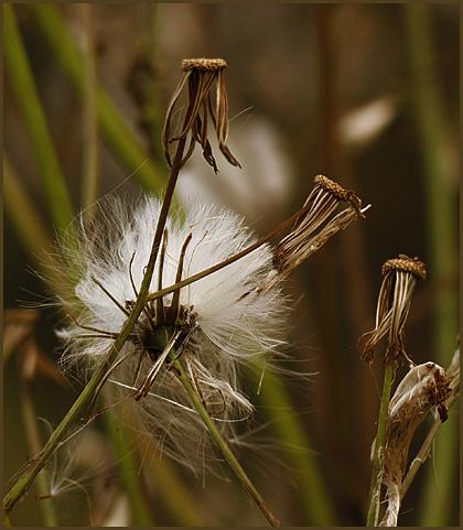"""фото """"Delayed Departure"""" метки: макро и крупный план, природа, цветы"""