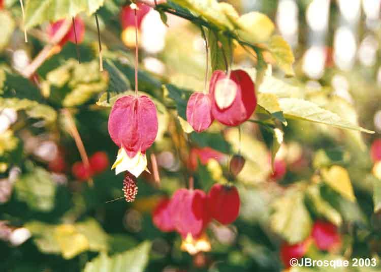 "фото ""Flowers #002"" метки: путешествия, природа, цветы"