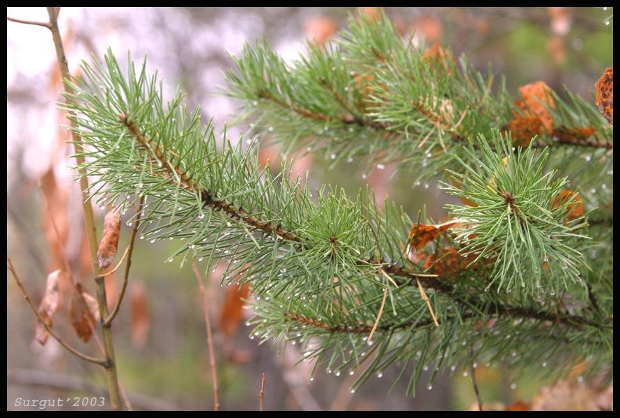 """фото """"В лесу"""" метки: природа, фотомонтаж,"""