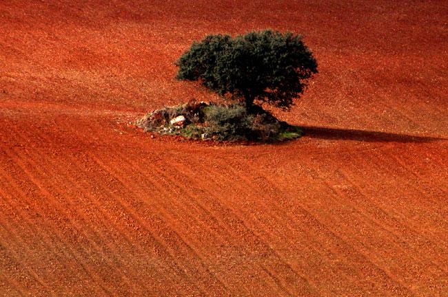 "фото ""autumn shades"" метки: пейзаж, осень"