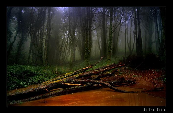 """фото """"Magical forest"""" метки: пейзаж,"""