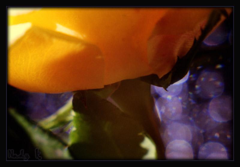 """фото """"Шелковый лоскутик ушедшего лета..."""" метки: природа, макро и крупный план, цветы"""