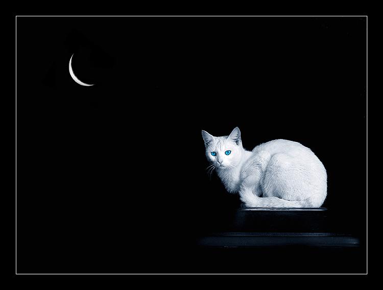 http://www.photoforum.ru/f/photo/000/094/94123_82.jpg