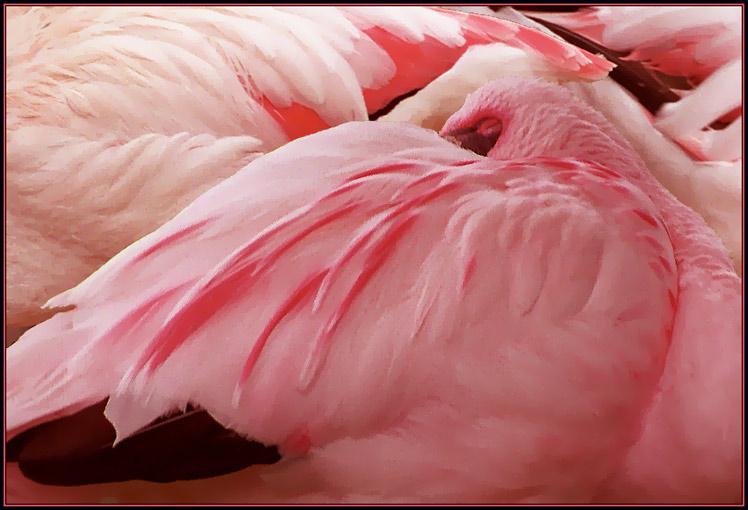 """фото """"Розовые сны"""" метки: природа, дикие животные"""